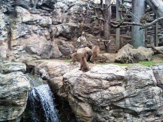 Zoo_010