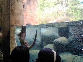 Zoo_019
