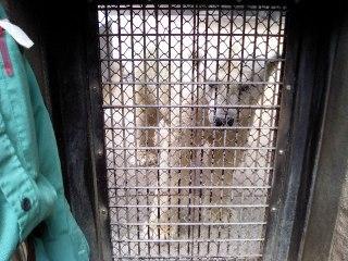 Zoo_021