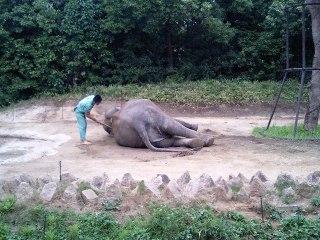 Zoo_027