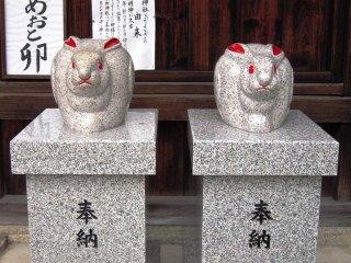 Shiga_046