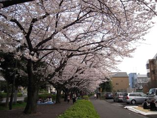 2011sakura_016
