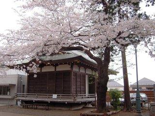 2011sakura_017