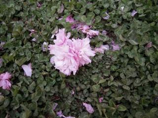 Sakura2011_003