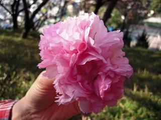 Sakura2011_008