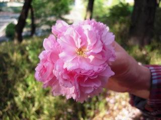 Sakura2011_009
